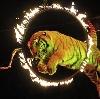 Цирки в Курганинске